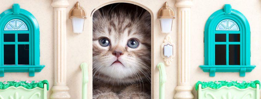 il gatto consigli per farlo sentire a casa